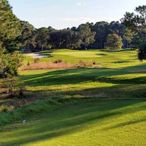 Cypress Head GC: #6