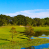 A view over a pond at Mangrove Bay Golf Course.