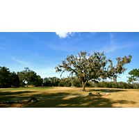 Mossy Oaks litter both the Rolling Oaks and Pine Barrens Courses at World Woods Golf Club in Brooksville, Fla.