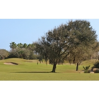 A tree blocks the right side of the third green on the Ocean Course at Hammock Beach Resort in Palm Coast, Fla.